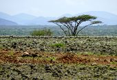 Landscape Nature. Mountains In The Distance. Lonely Tree On A Background Of Mountains. Africa, Kenya