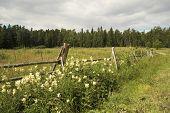 stock photo of pastures  - Island Valaam - JPG