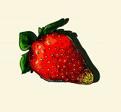 picture of testis  - Vector illustration drawing of organic  juicy strawberries - JPG
