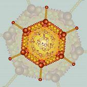 image of rabies  - Adeno virus - JPG