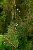 stock photo of cocoon tree  - Colorful new born butterfly on pine tree - JPG