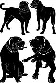 pic of english-mastiff  - Collection breed dog mastiff   isolated vector illustration - JPG