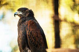 foto of hawk  - The Bay - JPG