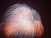 stock photo of night-blooming  - spectacular beautiful bright fireworks in the form of multi - JPG