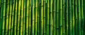 stock photo of bamboo forest  - green bamboo fence texture background - JPG