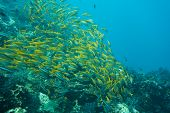 image of shoal fish  - Underwater photography of a shoal of fish - JPG