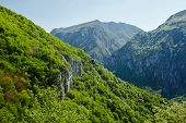 stock photo of afforestation  - Beautiful view of a high afforested mountains - JPG