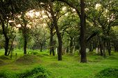 picture of burial  - Burial mounds at Confucius family cemetery in Qufu Shandong province China - JPG