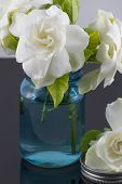 foto of gardenia  - Bouquet of fresh White Gardenias placed in small blue mason jar on white or black background as a decoration for a table - JPG