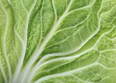 stock photo of water cabbage  - green leaf cabbage texture background - JPG