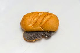 pic of dust mite  - Unhygienic dust and har sandwich - JPG