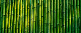 image of bamboo  - green bamboo fence texture background - JPG