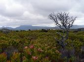 picture of fynbos  - grey winter landscape across the southern cape peninsula near cape town - JPG