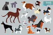 ������, ������: Different Breeds Of Dog Vector Collection