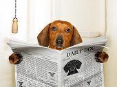 Dog Sitting On Toilet poster