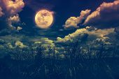 Bright Full Moon Above Wilderness Area, Serenity Nature Background. poster
