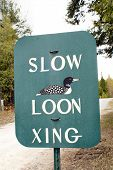 stock photo of loon  - Sign alerting drivers to hazard of wandering Loons near Northern Michigan cottages - JPG
