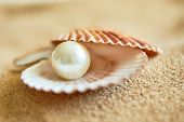 shell with a pearl poster