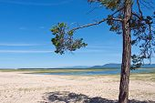 Mountain Landscape With Lonely Pine On Sandy Shore Of Lake Baikal, Siberia Russia poster