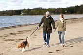 pet, domestic animal and people concept - happy couple with beagle dog on leash walking along autumn poster