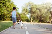 Dog And Little Child Backwards Walking At The Park Sunset. Friendship And Obedience Concept. poster