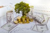 The Tree Is Growing Both On The Progress Of Money And Financial Reports, Along With Financial Accoun poster