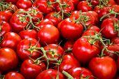 Tomato Background - Raw Tomatoes Closeup Tomato Background - Raw Tomatoes Closeup poster