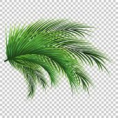 Palm Leaves. Green Leaf Of Palm Tree On Transparent Background. Floral Background. poster
