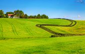 picture of bluegrass  - Horse farm with black wooden fences - JPG