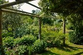 foto of pergola  - Wooden pergola gazebo in a beautiful blooming garden full of flowers and green plants - JPG