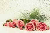 Pink Rose Flowers And  Textured Glass