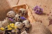 Quail Eggs In Basket And Flowers