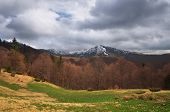 Spring landscape in the mountains. Carpathians, Ukraine, Europe