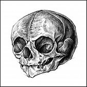 pic of cross-hatch  - Skull traditional ballpoint pen drawing - JPG