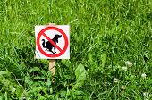 stock photo of excrement  - Sign prohibiting dogs shitting on the lawn - JPG