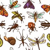 picture of dragonflies  - Insects sketch colored decorative seamless pattern with bug butterfly dragonfly vector illustration - JPG