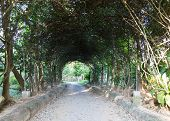 image of pergola  - walkway under long metal pergola in the garden - JPG