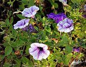 image of paysage  - Beautiful flower - JPG
