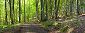 picture of ashes  - A dirt road in the mixed forest  - JPG