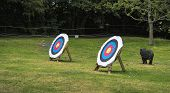pic of archery  - Outdoor archery target boards with archery arrows - JPG