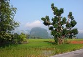 foto of hayfield  - roadside scenery with big tree and mountain seen in Laos a country in Southeast Asia - JPG