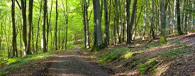 stock photo of dirt road  - A dirt road in the mixed forest  - JPG