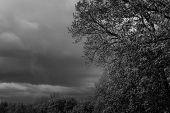 picture of cloud forest  - Dark storm clouds over green trees in a forest with copyspace in black and white  - JPG