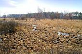 picture of boggy  - Landscape - JPG