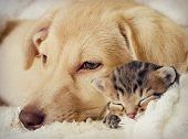 foto of puppy kitten  - Puppy and kitten are sleeping in a retro style - JPG