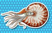 stock photo of creatures  - Closeup sea creature on blue polka dot background - JPG