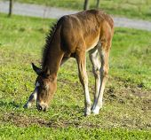 image of foal  - A pretty foal stands in a Summer paddock - JPG