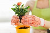 stock photo of plant pot  - people - JPG