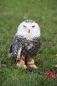 foto of eye-wink  - A close up of an owl winking - JPG