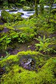 pic of smoky mountain  - Silky stream and sky reflections captured in the Smoky Mountains during springtime - JPG